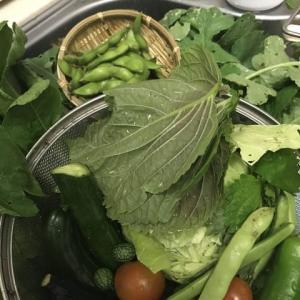 無農薬野菜★採れたて