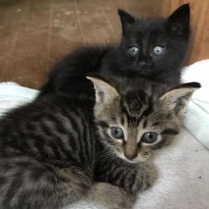 今日の子猫とラベンダー