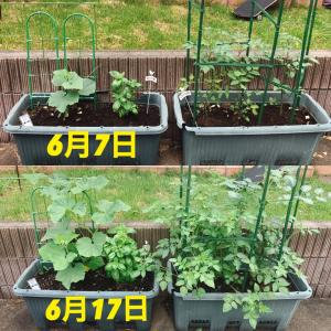 家庭菜園すくすく