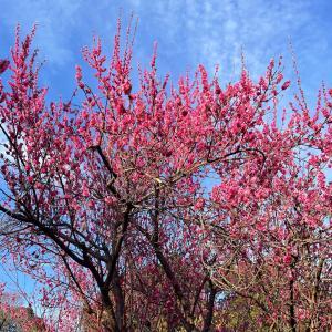 春が近づいてる