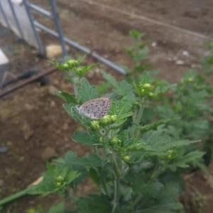 サツマイモと里芋の収穫!