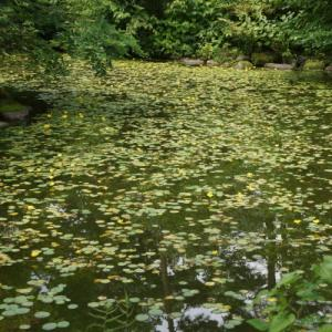 梅雨の晴れ間に伊香保を訪れた