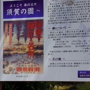 須賀の園の藤