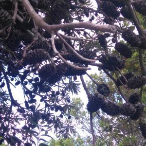 NZの気になる樹