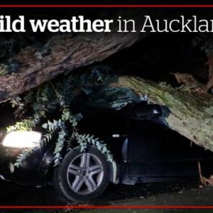 Auckland、2021年8月3日8時の天気は