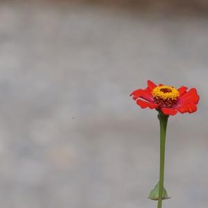 石原にも花