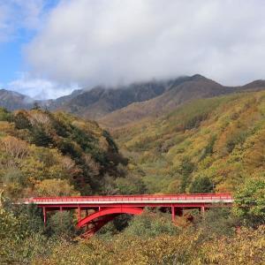 秋景色の赤い橋/ニホンジカの食害と台風による倒木