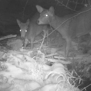 動物調査:ニホンジカ&ニホンアナグマ