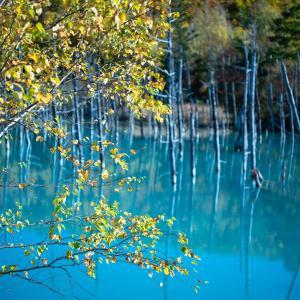 北海道上川郡美瑛にて 青い池 風景写真 / Sony α7RⅢ