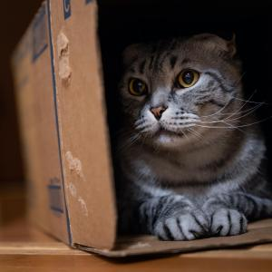 うちの猫シリーズ 「すず」/Sony α7RⅢ