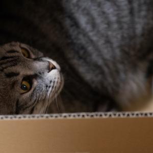 うちの猫シリーズ 「すず」にゃあにゃあの日 /Sony α7RⅢ