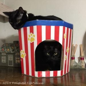 二階建な猫カップ~わが家のお猫様