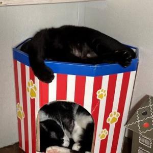 猫カップ上下でソーシャルディスタンス~わが家のお猫様