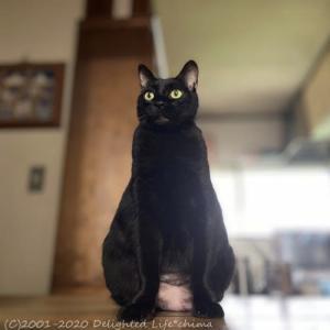 黒猫ちゃん~わが家のお猫様