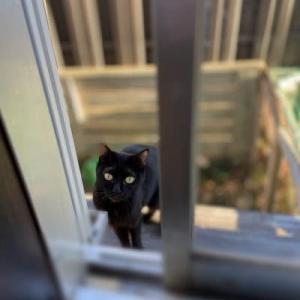 町内は黒猫だらけ