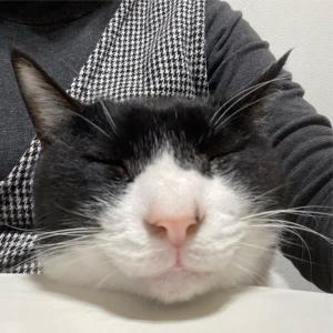 顎をのせて〜わが家のお猫様