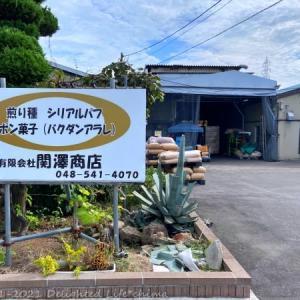 工場直売!鴻巣おこしと麦茶~関澤商店【鴻巣市】