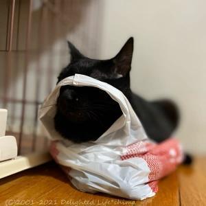 見えてますよ~わが家のお猫様