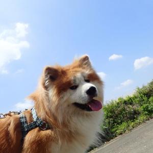 ついでのスキルアップ~カムイ編~