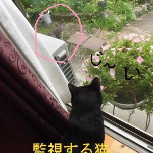 監視する猫♪
