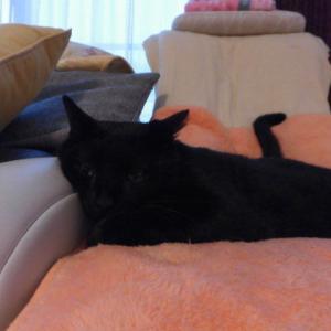 眠たい猫♪