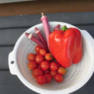 赤い野菜とどんちゃん♪