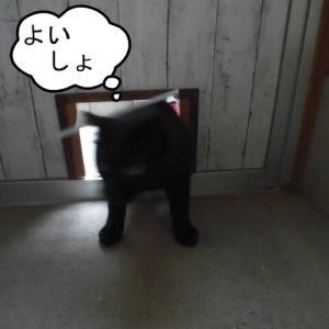 猫係の手を煩わせるチロやん♪