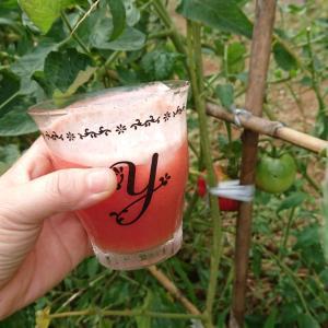 畑のトマトの大量消費にトマトジュースが美味しい!