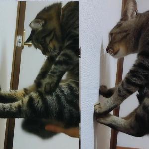 猫壁チャレンジしてみました!