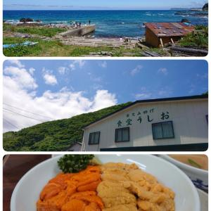 Sea urchin ~in Shakotan~