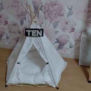 Cat's Tent