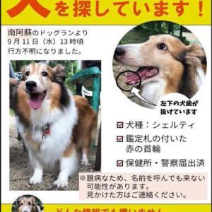 【拡散希望】南阿蘇で行方不明のチェルティちゃん、捜索中!