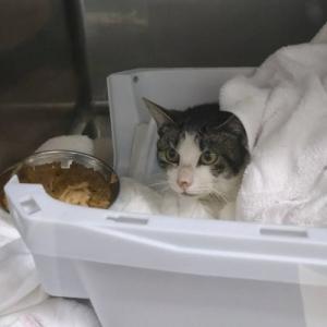 子ネコ入院から2日経過。