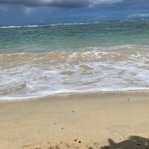シーズー犬 アラニガールのハワイライフ