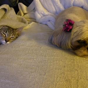 犬のアラニと子猫のナルの日常