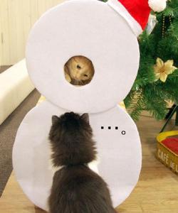 川越店「クリスマスにゃんぼ!宝くじ」当選番号の発表です♪