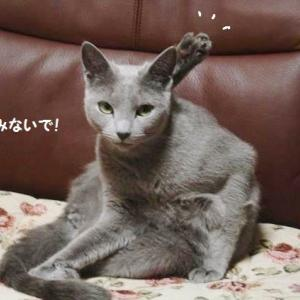 ドスの効いたみゅ~さん  こわっ!