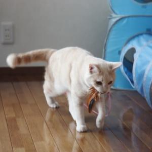 仔猫コータの羽遊び