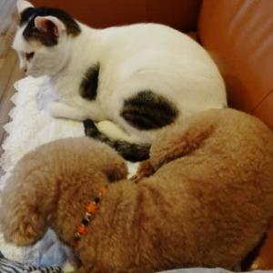 猫は猫同士?