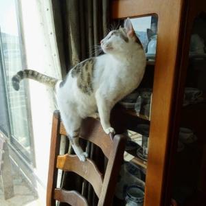 椅子の背もたれの上に4つ足を乗せようと挑戦