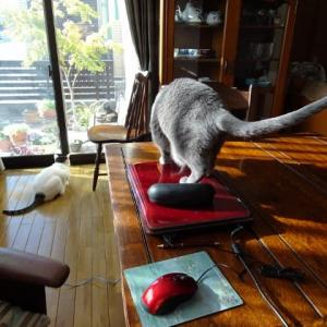 ミューさんと外猫サビちゃん