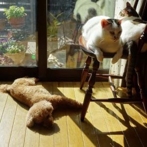 仲良しは一緒に日光浴♪