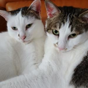 子猫にかまう大人猫&犬