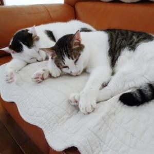 ラブマロのシンクロ寝♪