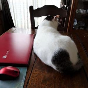 ストーカー猫