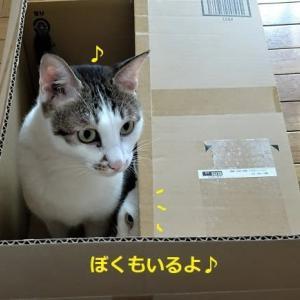 大きすぎる箱はNG?