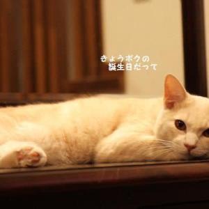 保護猫コータ
