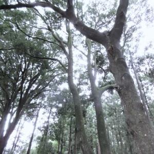 「記憶の森」