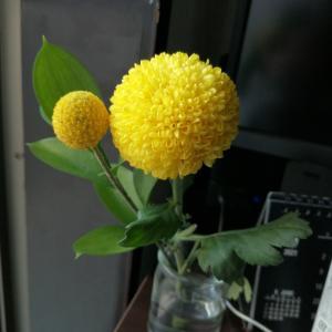 【お花のある生活】今週のお花
