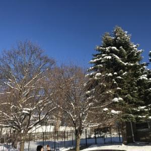 初雪!休校!